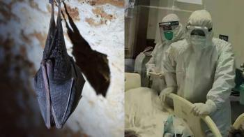 蝙蝠至少有200種冠狀病毒!專家:可能跑到人體