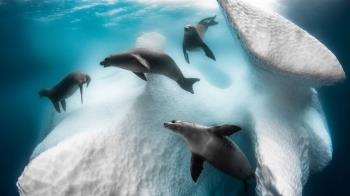 2020年度水下攝影大獎 展現隱秘世界千姿百態