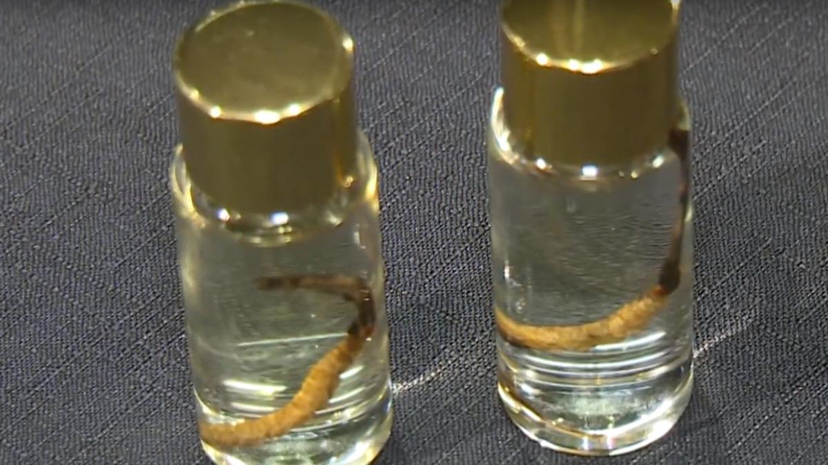 康力生技進軍大陸市場 冬蟲夏草量產技術再突破