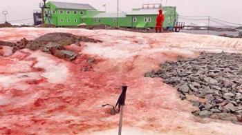 疫情最後淨土!南極雪地突染紅嚇壞 專家解釋了