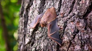 遭檢舉「賣蝙蝠」氣到PO文開罵 網笑翻:所以怎麼賣?