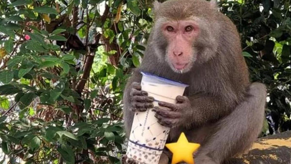 外送珍奶被猴子劫走 網曝AirPods被吞肚