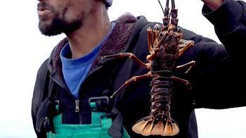 新冠疫情:南非龍蝦無處可賣,漁民瀕臨失業