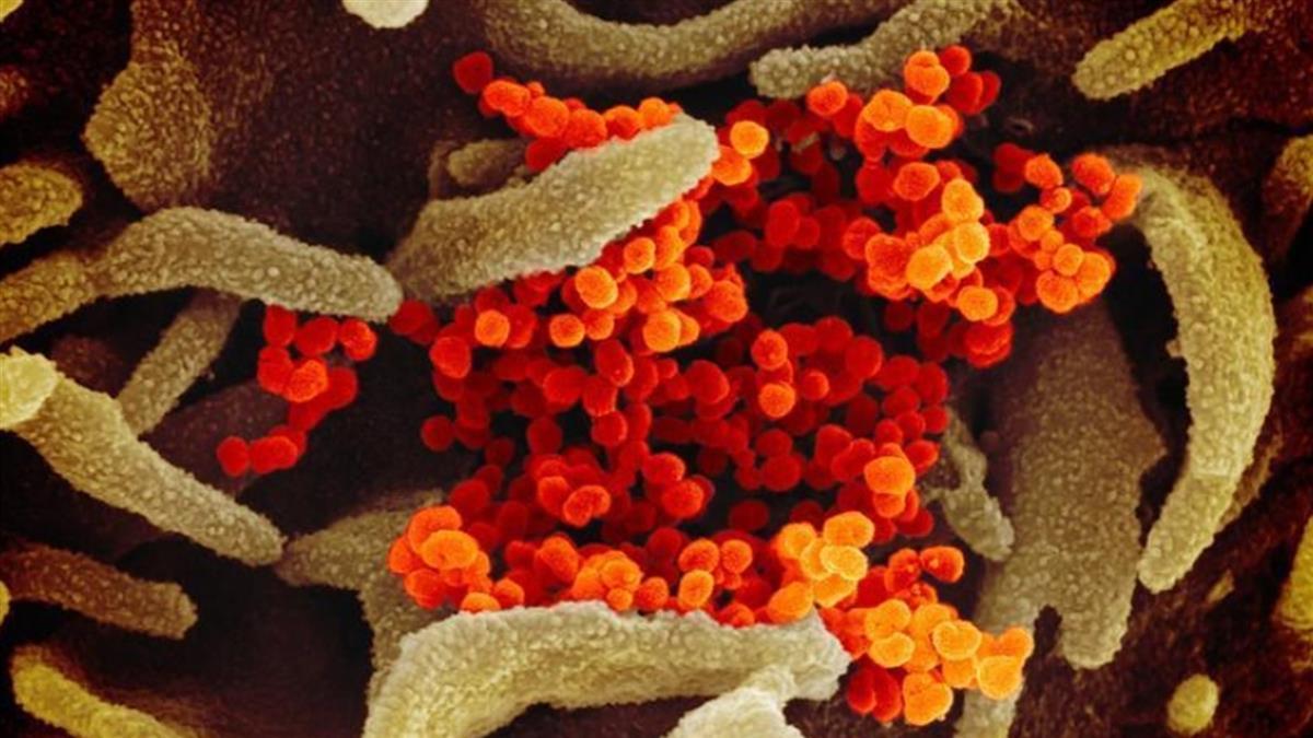 美研究:武漢病毒可附著於塵埃 空中飄浮3小時