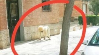西班牙人悶壞 扮狗遛自己!醫護人員崩潰了