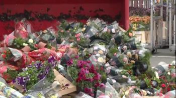 肺炎疫情:鮮花無人問津,荷蘭花農銷毀自己栽種的花朵