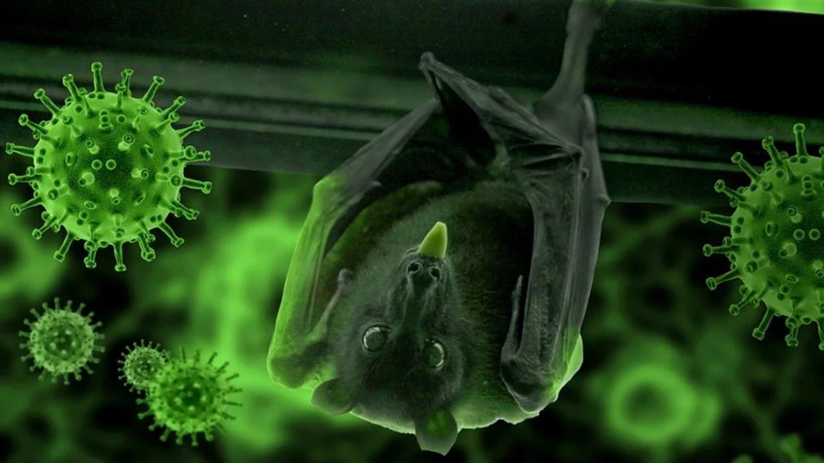驚人進展!陸美團隊從蝙蝠找到武肺病毒抑制劑