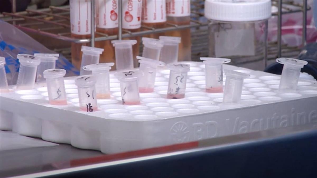 台灣「普篩」量能?指揮中心:每日檢驗量最高3800件