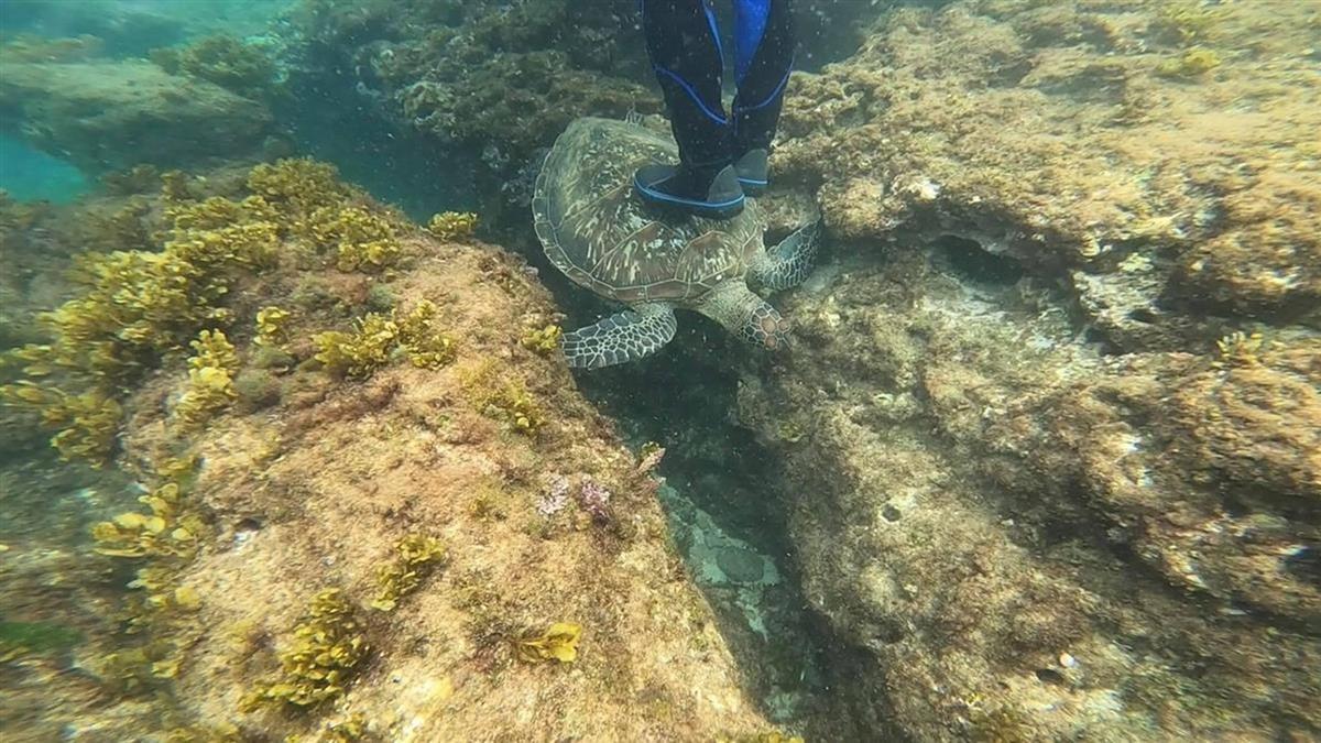 遊客雙腳狠踩小琉球海龜 海巡署霸氣喊6字