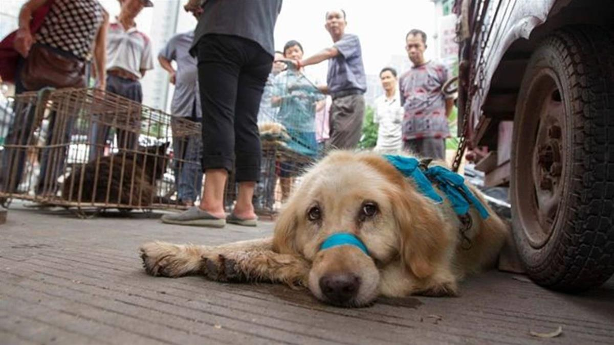中國農業部將狗歸入「伴侶動物」而非畜禽