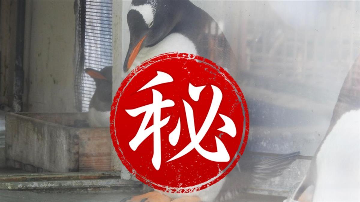 日本水族館驚見「20塊腹肌」企鵝 網友自嘆不如:我輸了