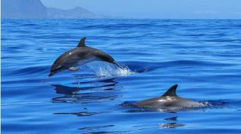 擱淺糙齒海豚救援失敗死亡  胃內發現垃圾袋