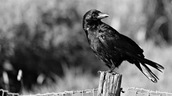 台灣團隊發現牙齒中的秘密 揭示鳥類躲過大滅絕