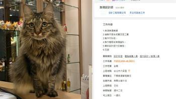 貓奴暴動!月薪45K工作項目是玩貓 正妹設計師親回