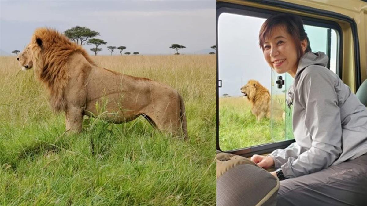 紀錄萬獸之王獅子 卻遇長頸鹿攔轎申冤 淚眼求援