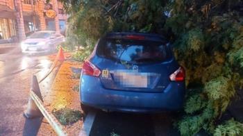 宜蘭市晚間強降雨 路樹倒塌壓毀2車