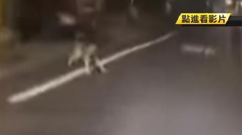 小狗追車!男友刻意騎慢 後座女友放聲尖叫