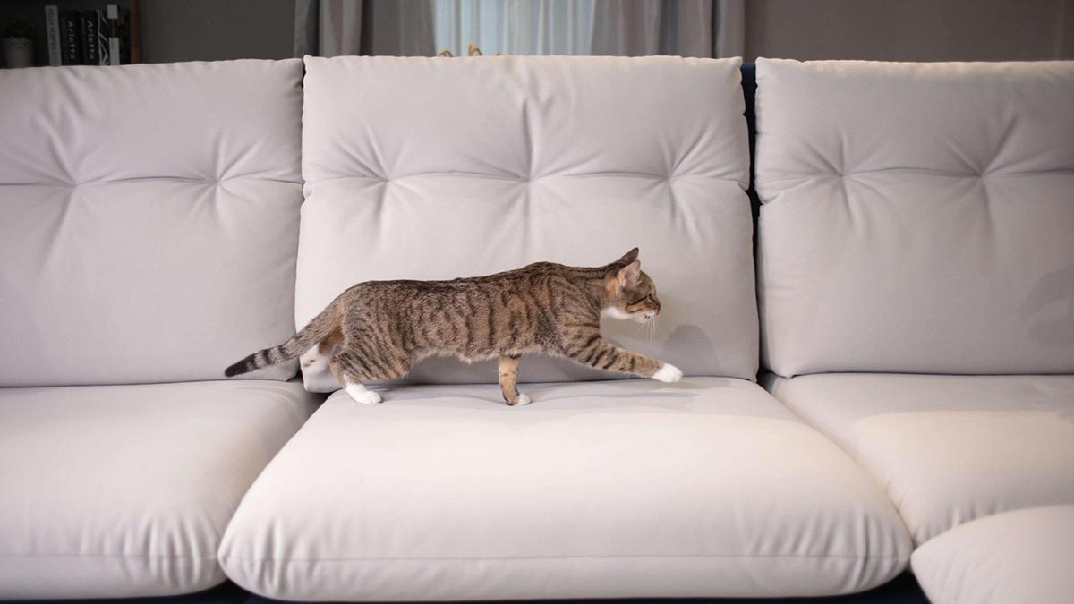 貓抓布沙發挑選三重點 原來讓貓不再抓沙發的關鍵是它