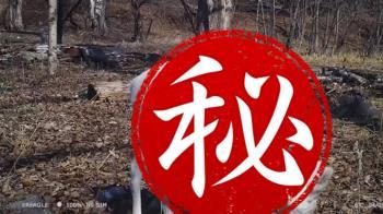 驚見古代神獸!睽違39年再現 影片曝