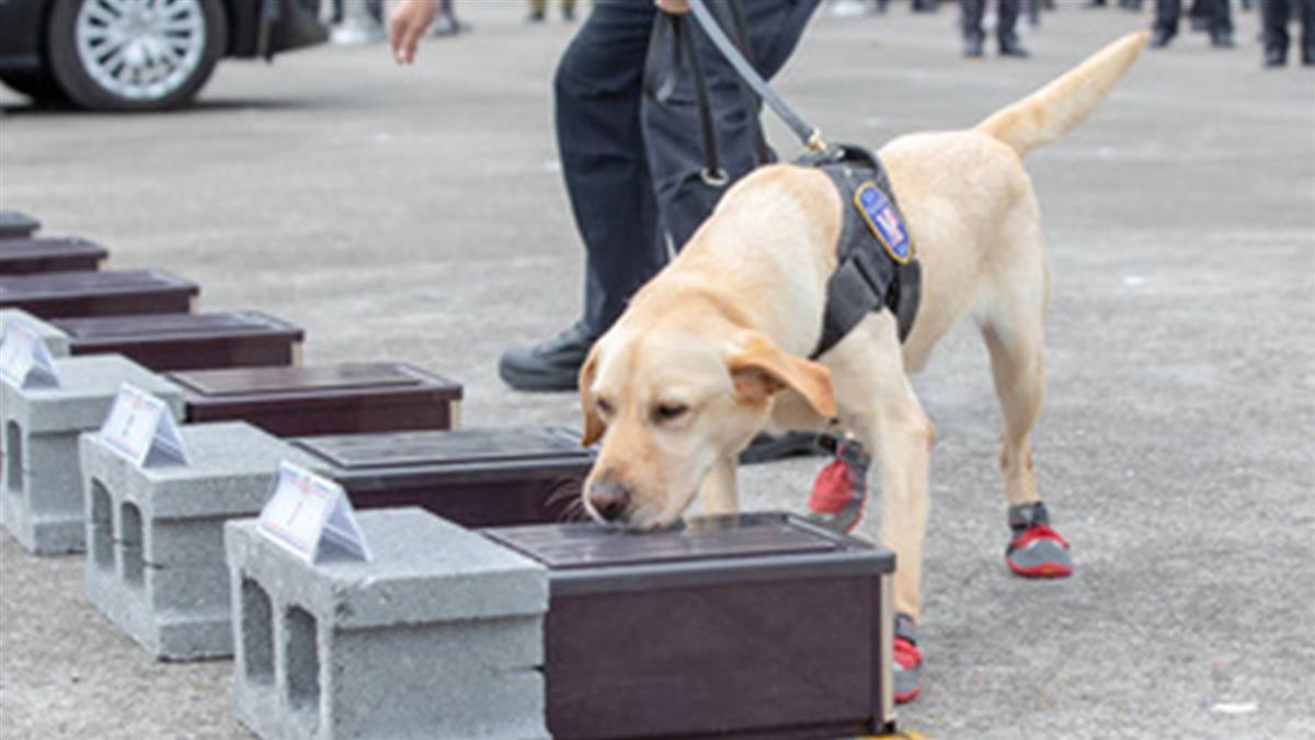 緝毒犬穿小紅鞋  蔡總統解密原因超可愛