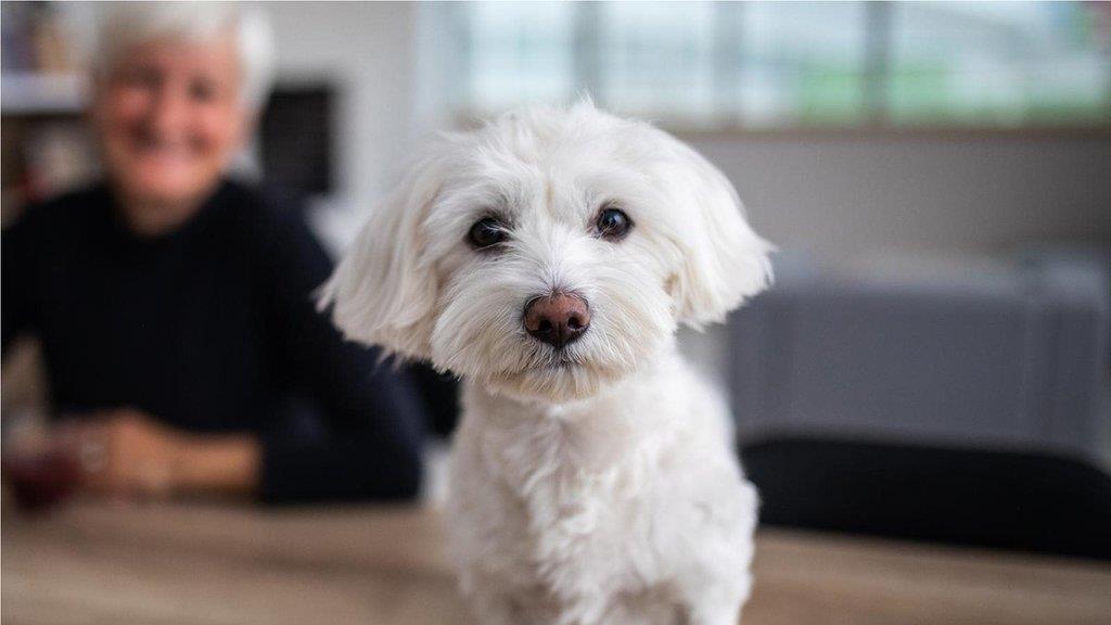 狗的生命里程:如何搞清楚你的愛犬到底有多大