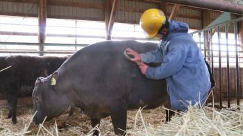 美味且稀有 日本監獄和牛一年只產20頭
