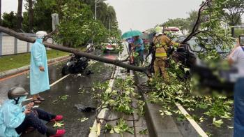 高雄下午暴雨侵襲 3層樓高路樹倒…4駕駛急送醫