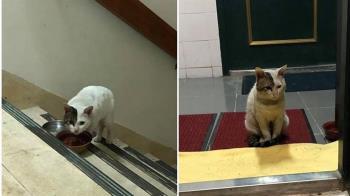 浪貓「每天爬20樓討飯」 正妹餵養半年意外曝身世