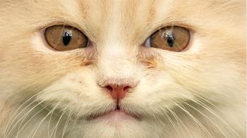 寵物與人的交流:貓是否會嘲笑人類主人