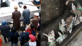 做功德?宗教團體野放 竟沒拆螃蟹繩變「放死」