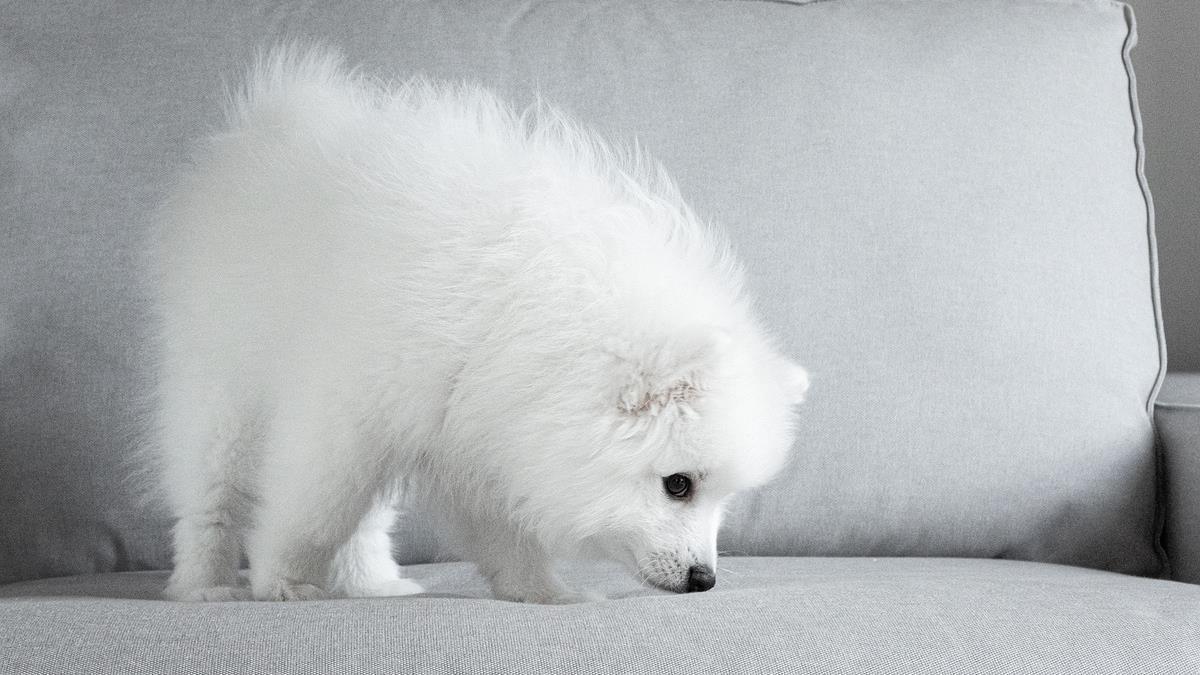 日本「科技白皮書」神預言 20年後人類可以跟貓狗對話