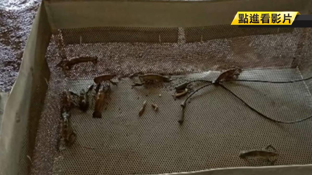 全台七縣市中「甲殼類病毒」!農委會強調:勿生食