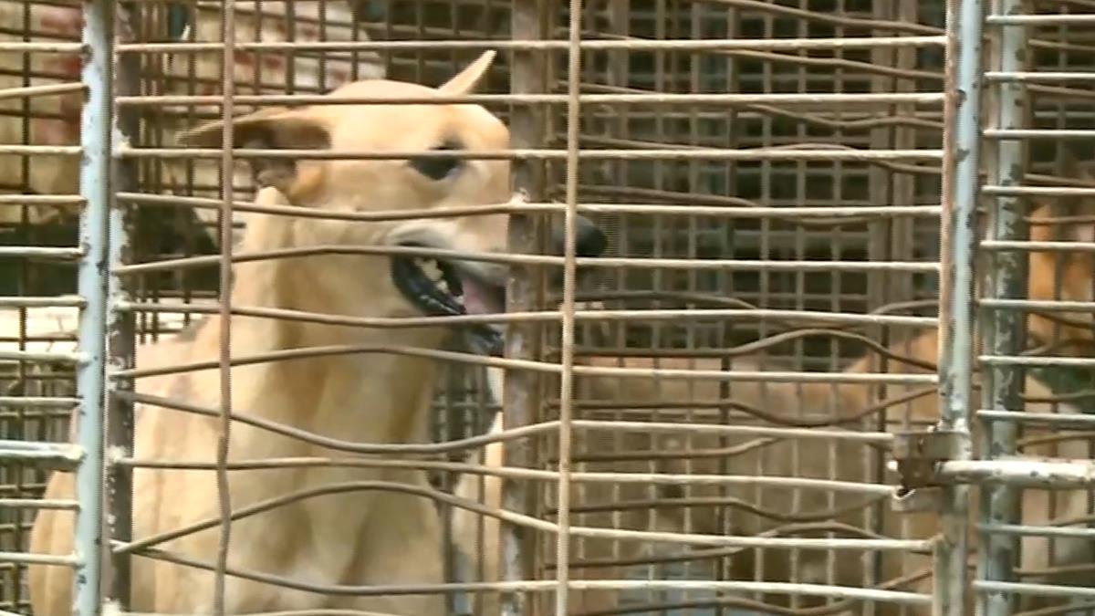 預防人畜共通傳染病 流浪狗接種英特威全效疫苗