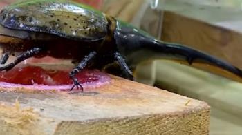 甲蟲當道成流行寵物  蟲種、周邊配備商機無限