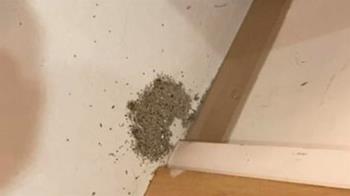 他家突出現黑色小土堆 網驚不妙:快找人驅蟲