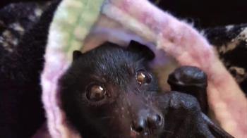 動保團體稱蝙蝠不該是新冠疫情的代罪羔羊