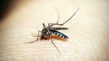 驚現人畜共通傳染病「坦布蘇病毒」 台灣蚊子監測到了