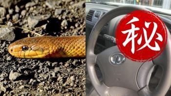 男打開車門 驚見巨蛇塞滿儀表板…嚇歪!