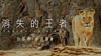 台灣不只防疫強!「消失的王者沙漠雄獅」獲國際科學官網專文介紹