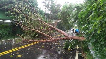 台中大雨路樹倒塌 女騎士遭壓傷送醫不治