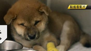 來源不明?幼犬買回3天染病亡 寵物店強硬回應了