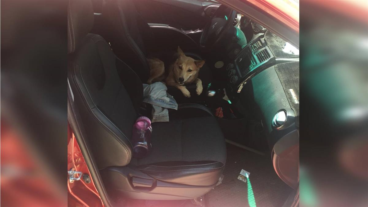 大熱天獨留毛小孩車上哀號 警急尋狗主人