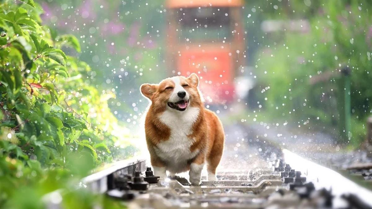 毛孩「慢性中暑」體溫飆破40度身亡 吹冷氣少一步驟奪命