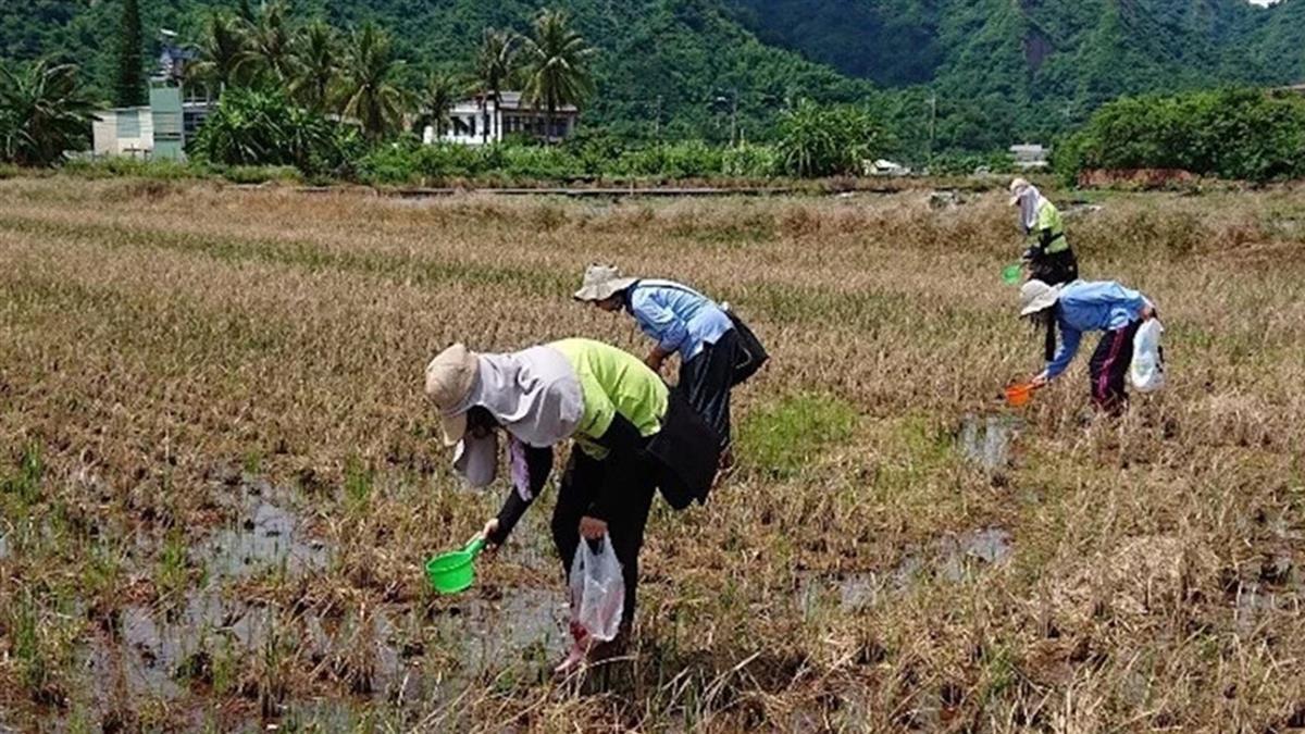 日本腦炎高峰!台灣狂增5例 婦染病突認不得家人