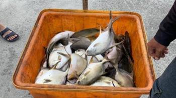 「因為苦過才知道」他捐魚給弱勢童加菜背後藏洋蔥