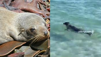 為讓小孩拍照!野蠻客拿棍棒打昏海豹 拍完再丟回海裡