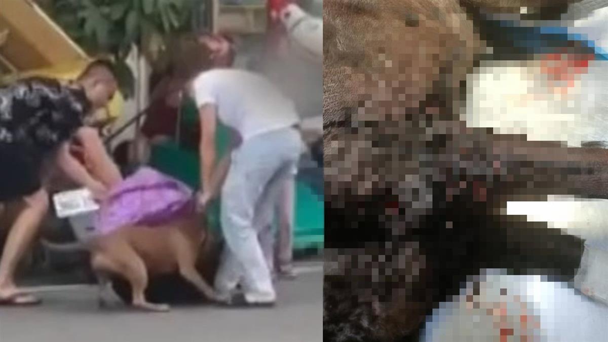 7個人拉不開!比特犬衝對街狠咬小黑 32秒驚悚畫面曝