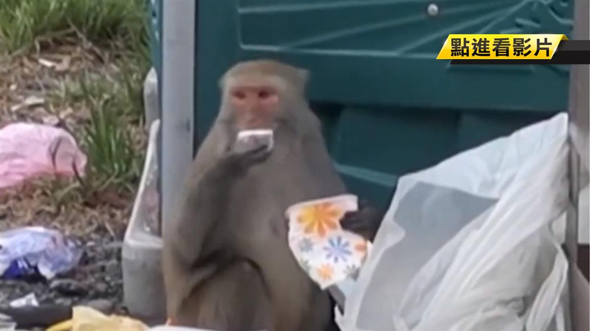 扯!台灣獼猴開車門找食物吃 網驚太聰明