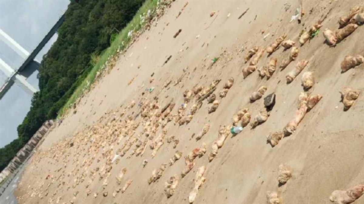 恐怖!東莞沙灘驚見不明內臟 屍塊連綿1公里