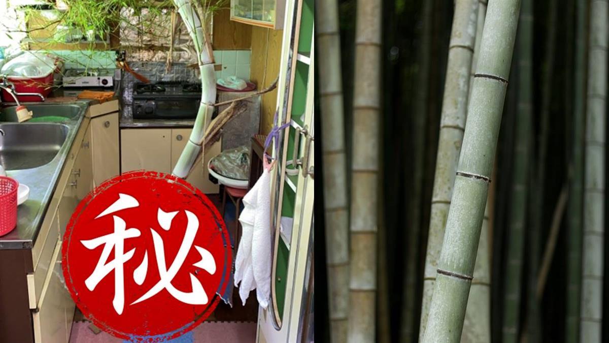 1個月沒回老家 廚房地板竟遭竹子「侵門踏戶」